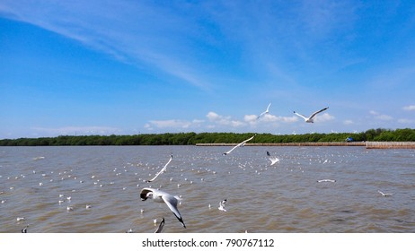 Go to the seagull on holiday at Bangpoo Thailand