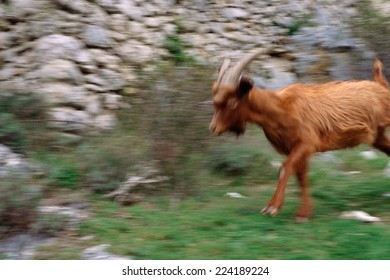 Goat, blurred