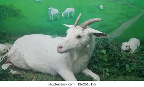 A goat and calf with nature background
