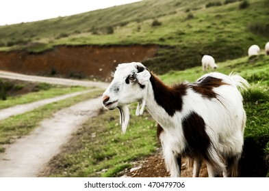 goat, country road and hill