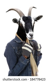 Goat dressed in jacket and gloves concept with human body