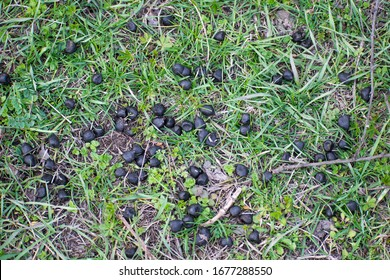 Goat droppings on green grass