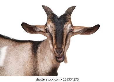 Goat gray-brown closeup on white background