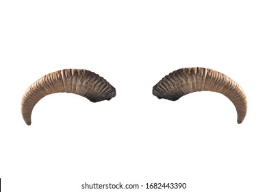 goat horns isolated on a white background