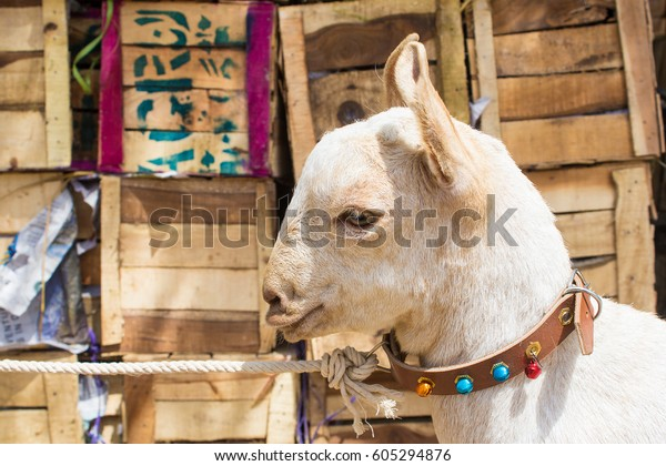 Goat Market Bakra Mandi Animal Market Stock Photo (Edit Now