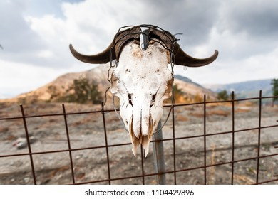 Goat skull with horns on a fence on crete island greece.