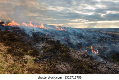 Goathland, Yorkshire, UK. Flames engulf heathland/moorland during a dry spell along the North York Moors  in late winter near Goathland, Yorkshire, UK.