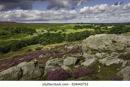 Goathland, Yorkshire, UK. Heather in bloom over the North York Moors national park showing the undulating landscape with rocks, trees, and isolated farmhouse near Goathland, Yorkshire, UK.