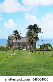 Goats grazing along the coast with a  church in the background and palm trees swaying in the breeze