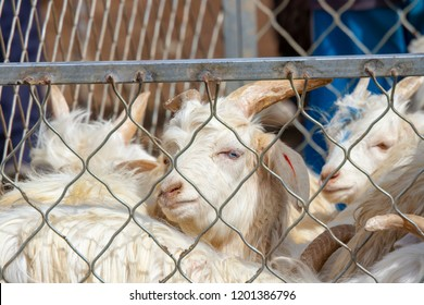Goats in pen enclosure at the Sunday Livestock Bazaar and Market in Kashgar, or Kashi, China.