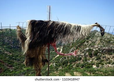 Goat's skin on the metal fence in mountain region of Crete island, Greece