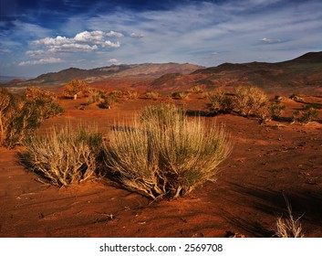 Gobi bush on sunset