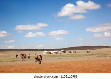 Gobi desert. Mongolia