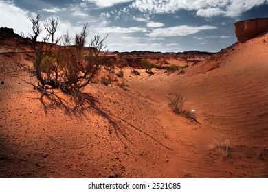 Gobi Desert parched plants