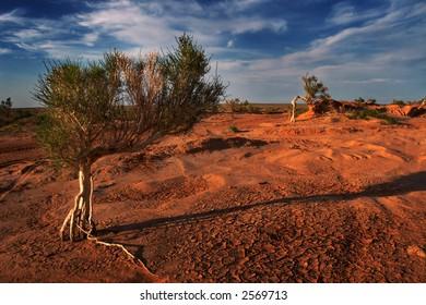 Gobi tree