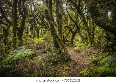 goblin forest in taranaki, new zealand