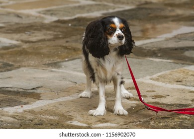 Gog waiting for his owner, in the Old Town Grado, Italy
