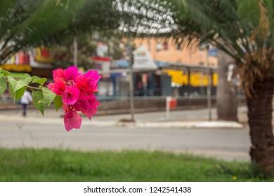 Goiania, Goias/BRAZIL - November 25, 2018 : Spring on a bus stop in the central region of Goiania, Goias, Brazil