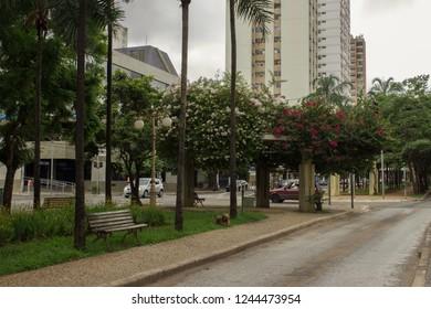 Goiania/goias/brazil - November 25, 2018: Exuberant flowers at Goias avenue in Goiania city on a cloudy day.