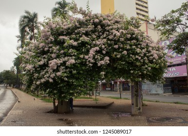 Goiania/goias/brazil - september 23, 2018: Monument of three human races in civic square of Goiania, capital of goias state in brazil