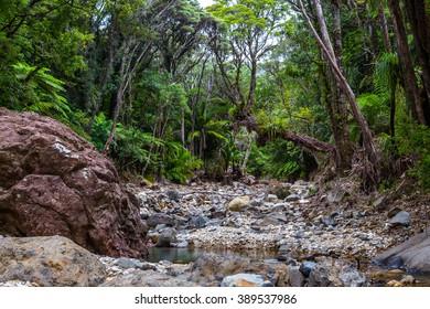 Going up along the Kairarra stream, Great Barrier Island, New Zealand