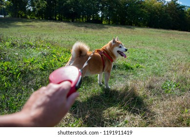 going out for a walk with a dog, dog on a leash, first person perspective