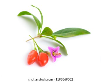 Goji berries or Lycium barbarum with flowers isolated on white background