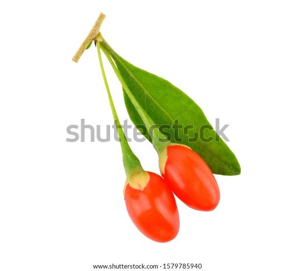 Goji Berry Leaves No Shadow Ripe Stock Photo Edit Now 1579785940