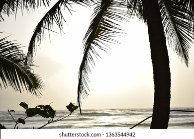 Gokarna Evening. Silhouette of coconut trees and beautiful shades of yellow.