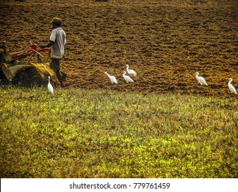 Gokarna Karnataka India December 13-2017 farm worker in the  field with a tractor preparing the soil