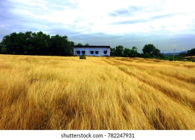 gokarna library in the field