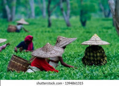 GOLAGHAT, ASSAM, INDIA - APRIL 18, 2007 : Women Tea Picker of Assam tea garden in lowland of Brahmaputra River Valley.