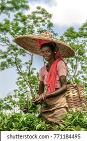 GOLAGHAT, ASSAM, INDIA - APRIL 18, 2007 : Portrait of woman tea picker, Assam Tea Garden grown in lowland of Brahmaputra River Valley and plucking leaves is mainly done by female.