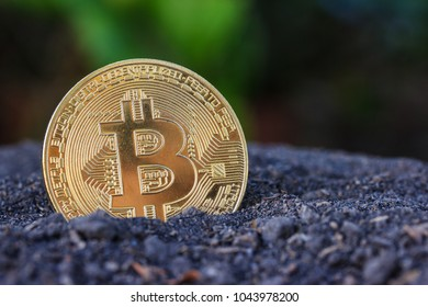 Gold Bitcoin coin on soil and nayure background.