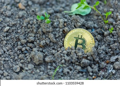 Gold Bitcoin in the ground