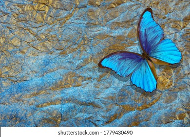 gold blue texture background. bright blue morpho butterfly on a golden crumpled paper.