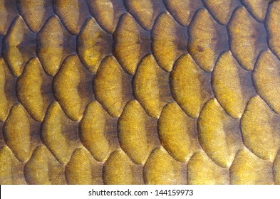 Gold carp scales close-up
