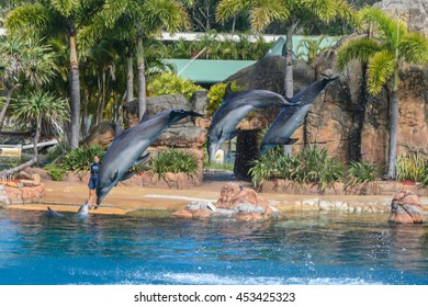 GOLD COAST, AUS - DECEMBER 21 2011:Dolphins are jumping into the air at Sea World Gold Coast Australia which is a marine mammal park and theme park include rides, animal exhibits and other attractions