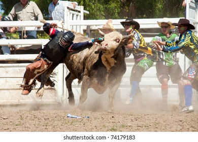GOLD COAST, AUSTRALIA - JANUARY 26: Unidentified cowboy falls from dangerous bull on January 26, 2011 in Gold Coast, Queensland, Australia. The rodeo show was part of Australia Day celebration.