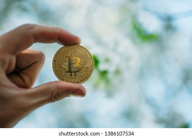 gold coin in spring in flowering trees