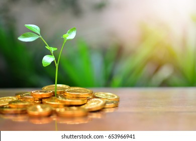 gold coins growth up to profit concept investment business and finance