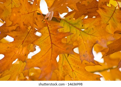 gold colored autumn leaves background