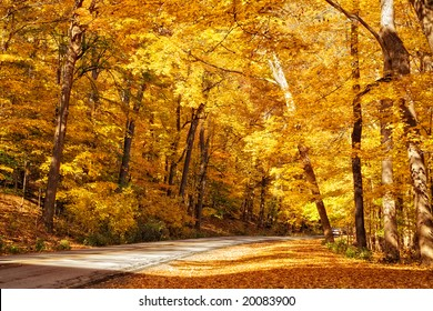 Gold colored autumn trees line the road in a park.