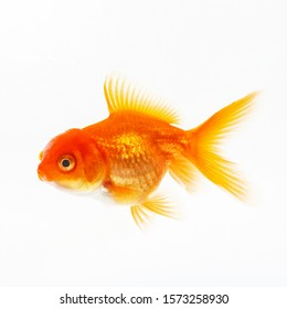 Gold decorative fish on a white background