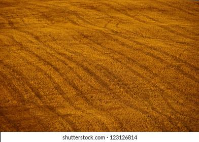 Gold field