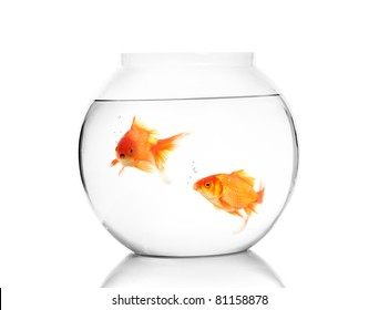 Gold fish with bowl Isolation on the white