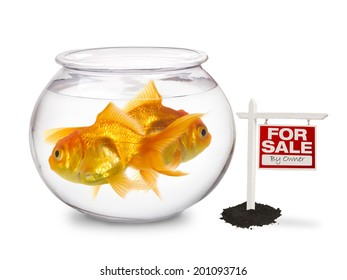 Gold Fish Bowl - For Sale