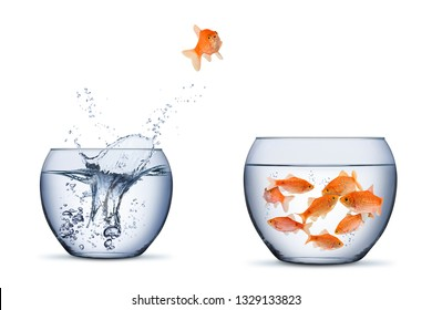 gold fish change move retrun separartion family teamwork concept jump into other bigger bowl isolated on white background