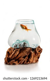 Gold fish in the decorative fishbowl standing on the wooden stand isolation on the white background. Aquarium with fish for Iranian Nauryz