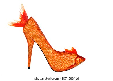 Gold fish high heel, isolated on white background. This image has been created in Photoshop. It does not exist in real life, it's a photo manipulation. No animal was mistreated during the session.